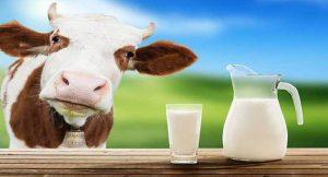 गाय के अमृत जैसे दूध के होते है इतने फायदें जानकार आप भी हो जायेंगे हैरान -  Namanbharat