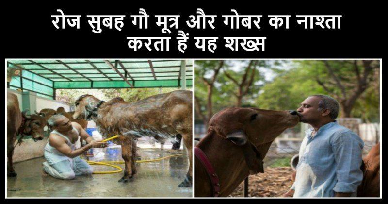 गायों के लिए
