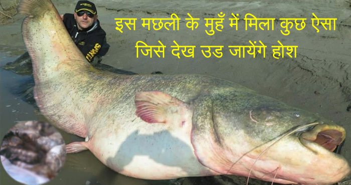 समुन्द्र के किनारे पड़ी इस मछली के मुँह में मिला कुछ ऐसा जिसे देख लोगो को नहीं हुआ यकीन, तस्वीर देख उड़ जायेंगे होश