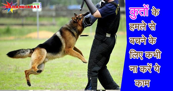 कुत्तों के हमले से बचने के लिए कभी ना करें ये काम, वरना पड़ जाएंगे मुसीबत में आप।