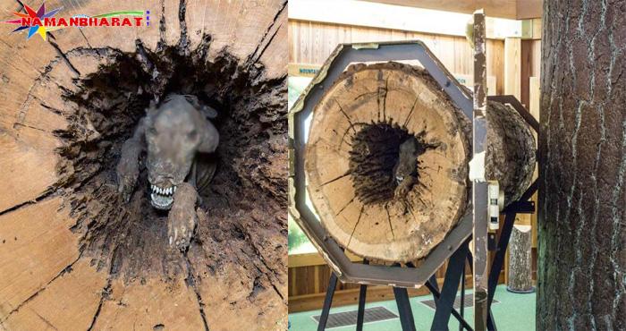 60 साल पुराने पेड़ के अंदर से निकली ऐसी भयानक चीज, जिसे देखने वालों की उड़ गई नींद