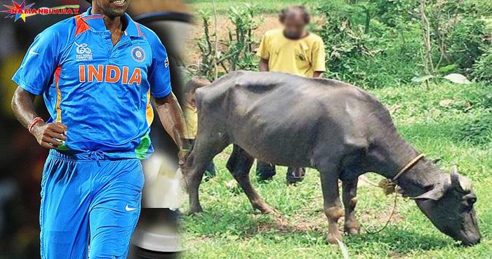 वर्ल्ड कप में भारत को जीत दिलाने वाला यह क्रिकेटर, आज गाय भैंसे चराने को है मजबूर
