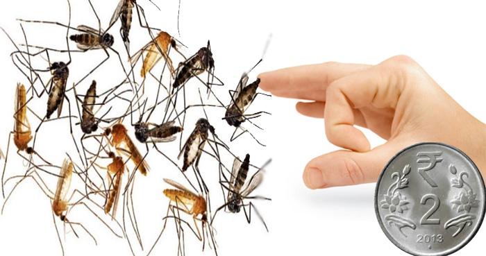 मात्र 2 रूपए का ये चीज आपके घर से हमेशा के लिए मच्छर को कर देगा बाहर, जानें कैसे करें प्रयोग