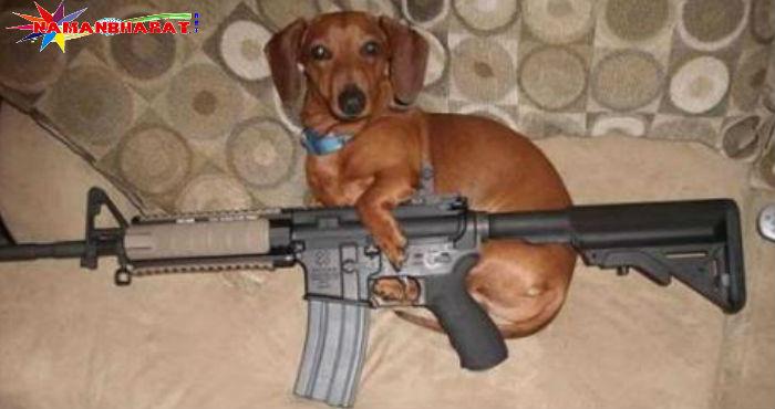 कुत्ते ने मालिक
