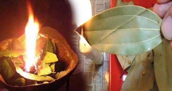 सोने से पहले जला लें केवल एक तेज पत्ता, 5 मिनट में दिखेगा गजब का फायदा