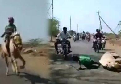 9 साल के लड़के ने फिल्मी स्टाइल में जीती रेस, घोड़े से गिरने के बावजूद फिर उस पर चढ़ा, देखे विडियो